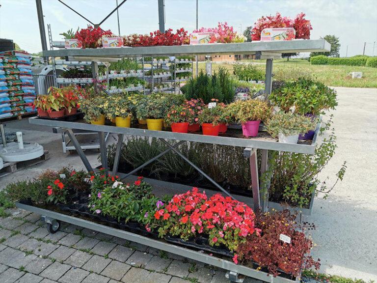 Fiori e piante per tutti i gusti